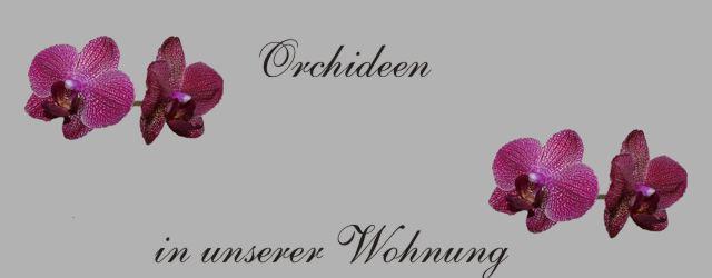 Gedichte Und Zitate Für Alle Orchideen In Unserer Wohnung