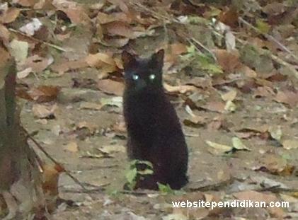 Mata Kucing Bersinar di Siang Hari