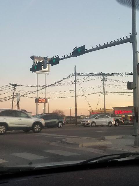 Kota Texas Yang Sedang Mengalami Masalah Burung