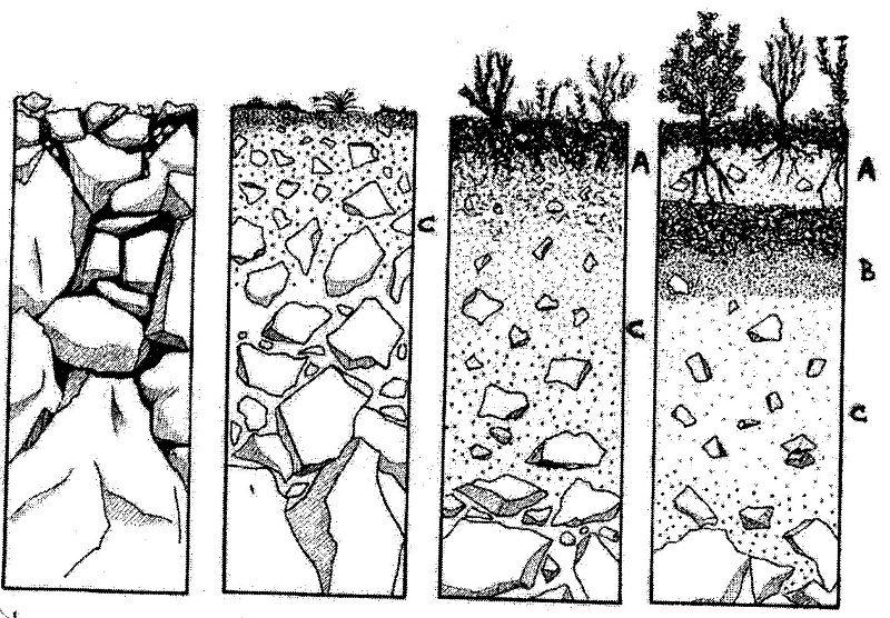 Mi rinc n de las ciencias de la tierra for Suelo organico para dibujar
