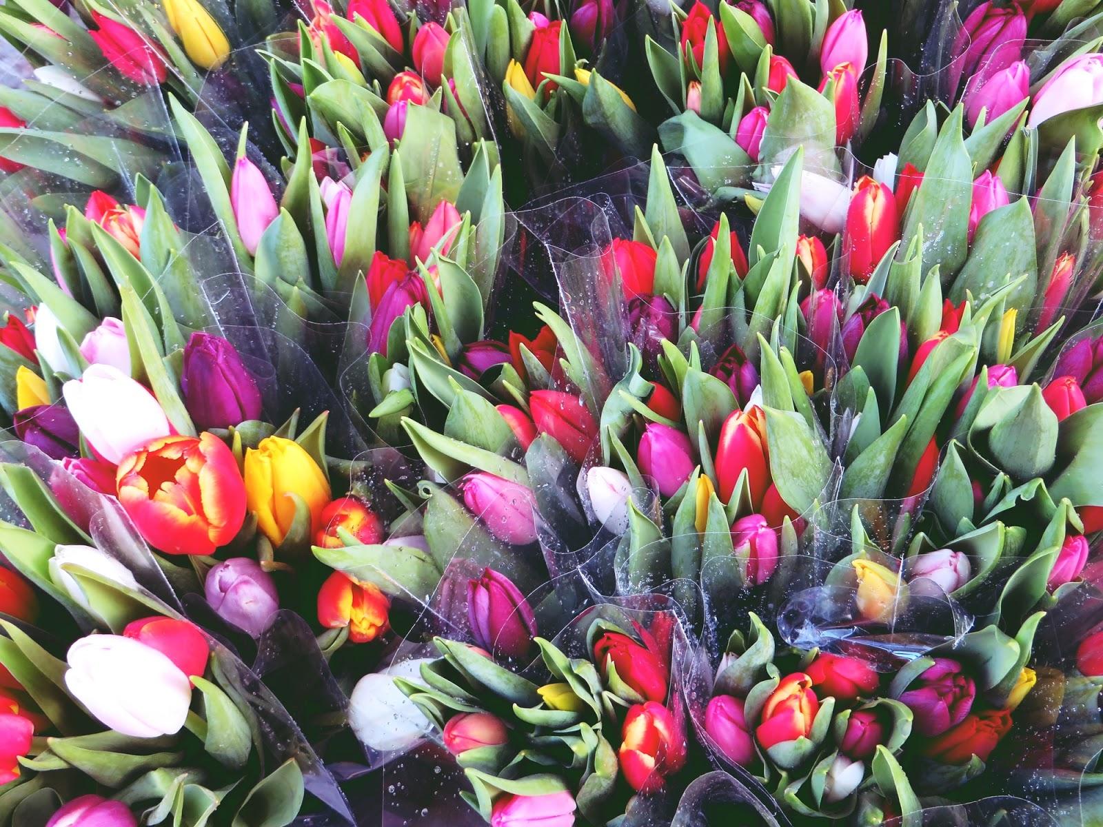 tulips, tulppaanit, kevät, tulppaanikimppu
