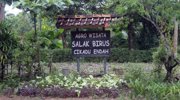 Kebun salak di Kampung Cikadu Tanjung Lesung