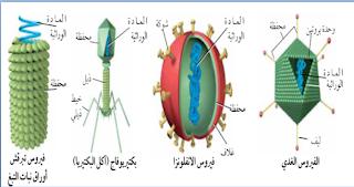 3 2 الفيروسات والبريونات الملف الألكتروني لمادة الأحياء