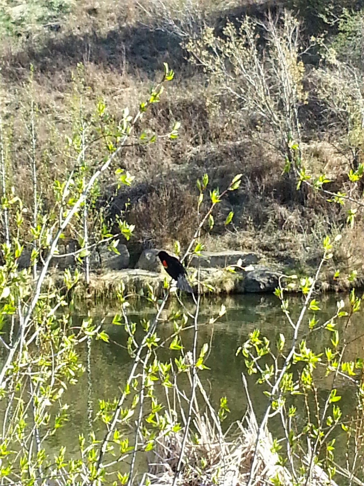 Your Weekend Planner (April 8-10): Biking, Hiking, Birding