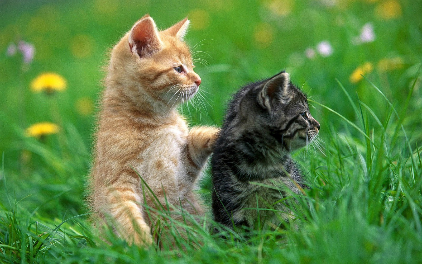 Fascinating Articles and Cool Stuff: Cute Kittens Wallpapers |Cute Cat Backgrounds