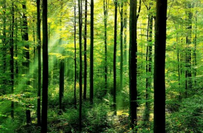 11 Arti Mimpi Hutan Menurut Primbon Jawa Terlengkap ...
