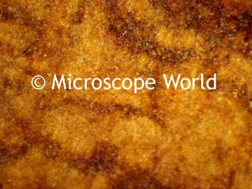 Microscope World Blog: Cinnamon Under Microscope