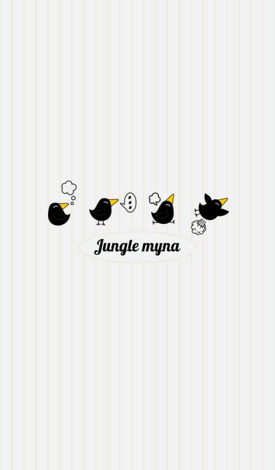 Jungle myna
