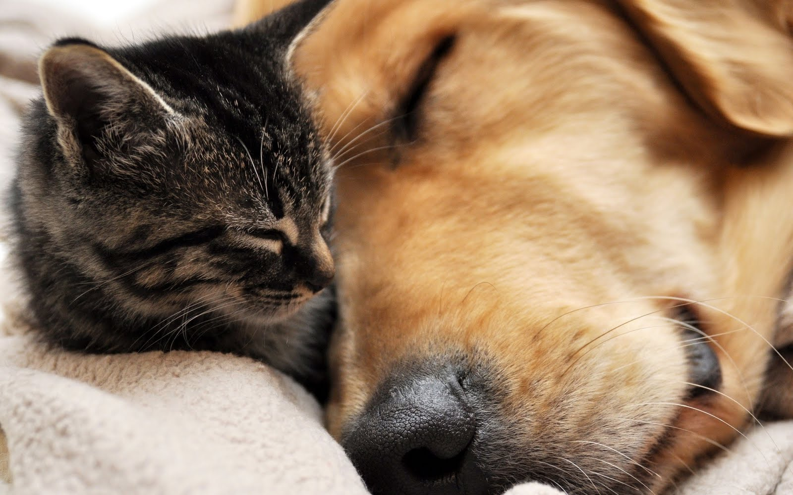 norbi's Blog: Cat and Dog