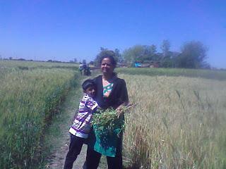 गेहूँ-चने से भरे-लदे खेतों में एक दिन