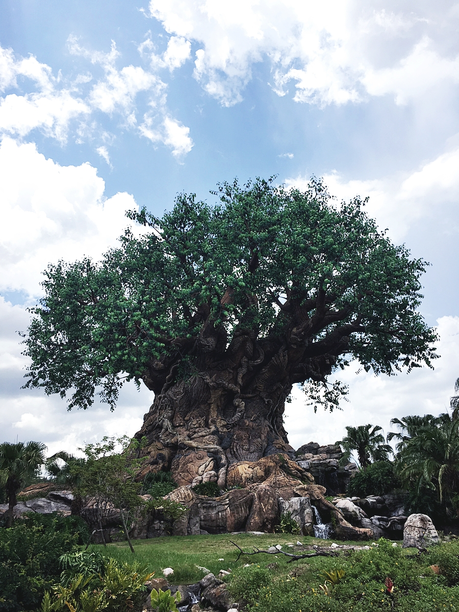 theme park wild world orlando disney animal kingdom