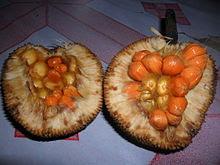 manfaat-buah-keledang-bagi-kesehatan,www.healthnote25.com