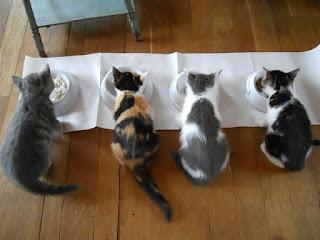 Cara Merawat kucing Anggora untuk pemula