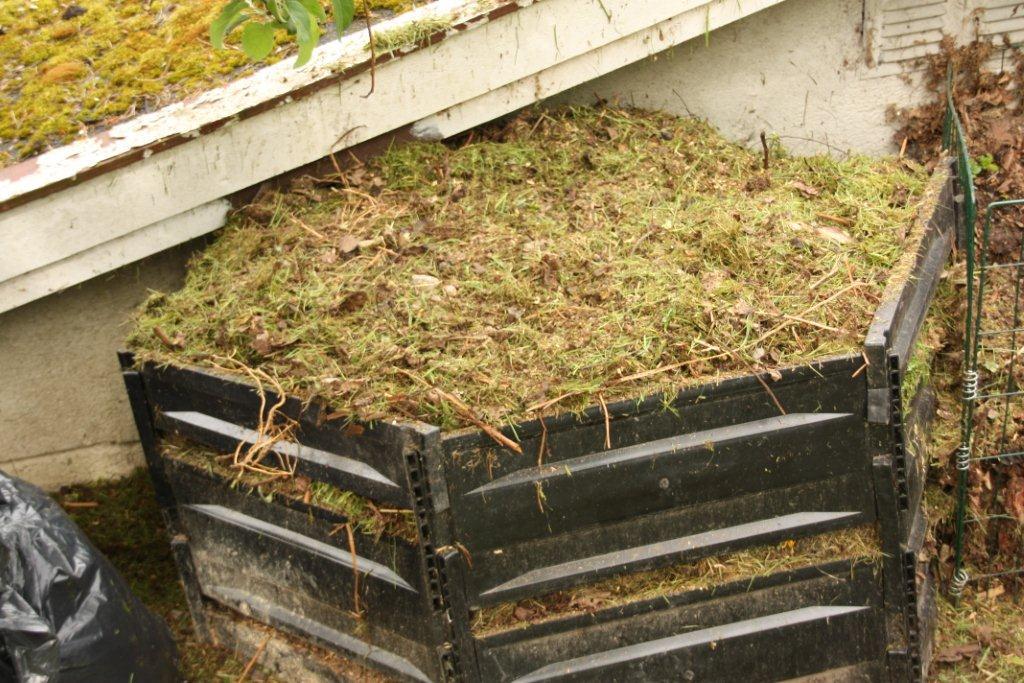 Kompost gress