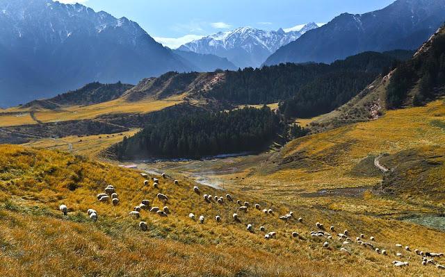 Thảo nguyên núi Qilian
