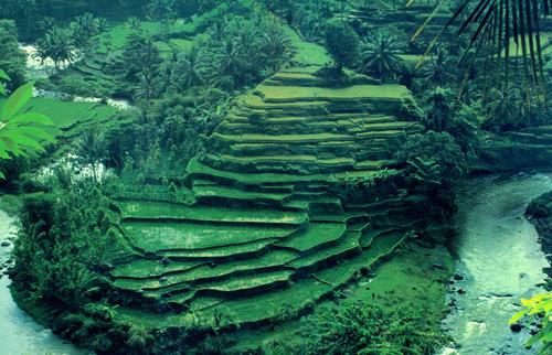 Desa Ubud di Bali