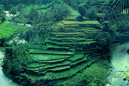 Keindahan Wisata Desa Ubud di Bali