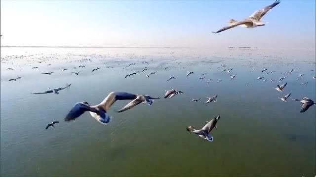 migrasi burung
