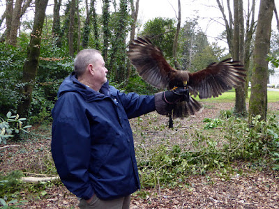 The Hawkeye Falconry Experience - Faithlegg House Hotel