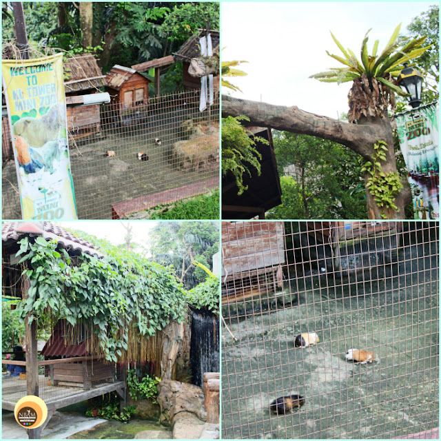 KL TOWER MINI ZOO at Kuala Lumpur, Malaysia, NBAM Blog. Things to do and see in KL tower, Malaysia