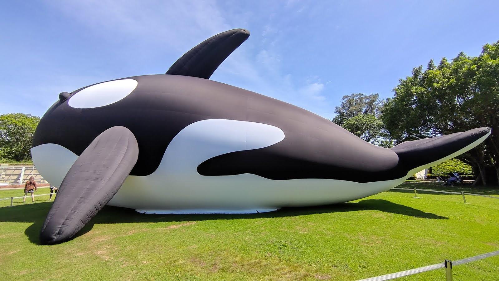 安平虎鯨Orca日前神秘消失|回來時竟然帶了超可愛女友|活動
