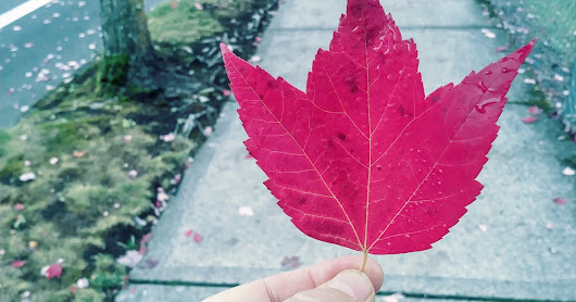 Year Four, Day 60: The Leaf and The Beginning of My Odyssey