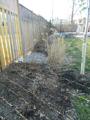 North York Toronto spring garden cleanup before by Paul Jung Gardening Services Inc