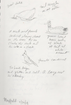 sketch of birds a t Mayfield Park by David Borden