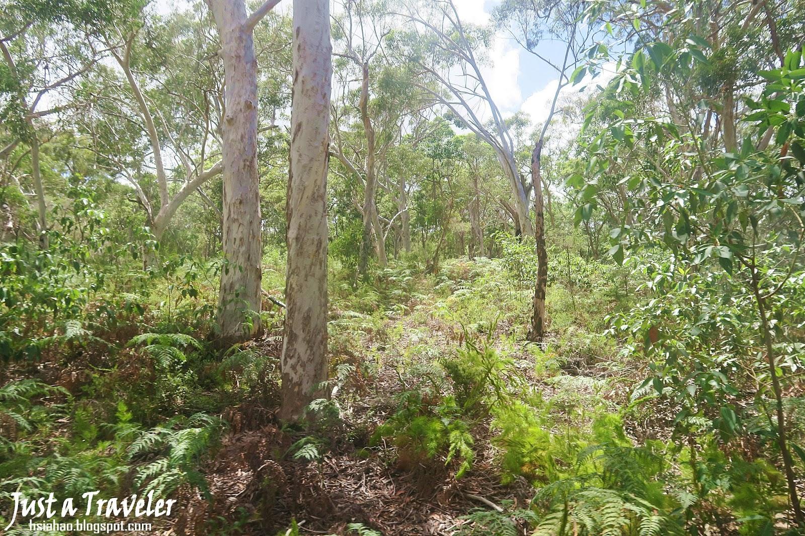 布里斯本-摩頓島-森林-景點-交通-住宿-推薦-旅遊-自由行-澳洲-Brisbane-Moreton-Island-Tourist-Attraction-Travel-Australia