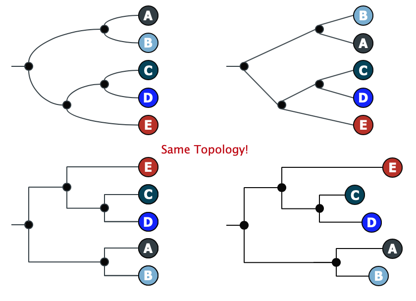 The Cabbages of Doom: How to read a phylogenetic tree