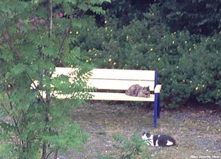 Utsikten min til kattebenken!