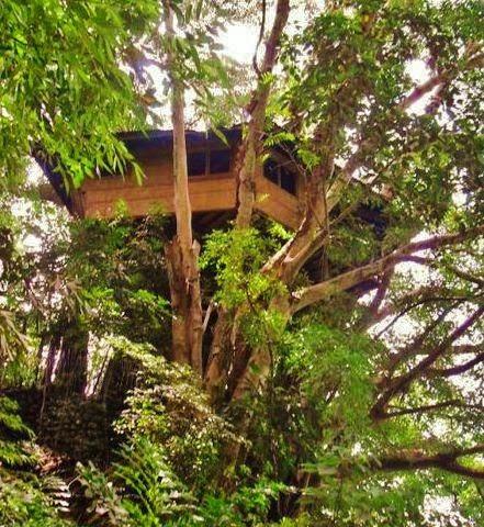 Tree-house-in-Balanan