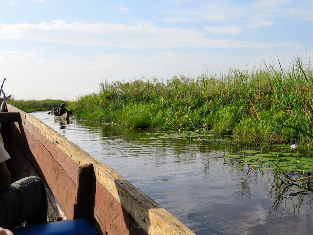 Cruising on Mabamba Swamp in Uganda