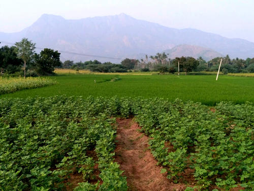 5 Acres Agri Land For Sale at NarasaraoPet Cross Road