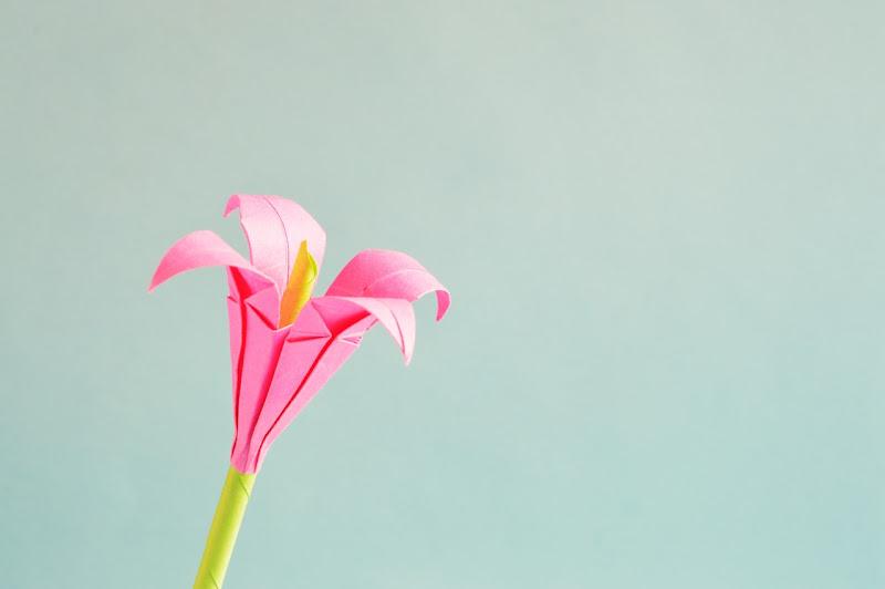Making beautiful paper flowers