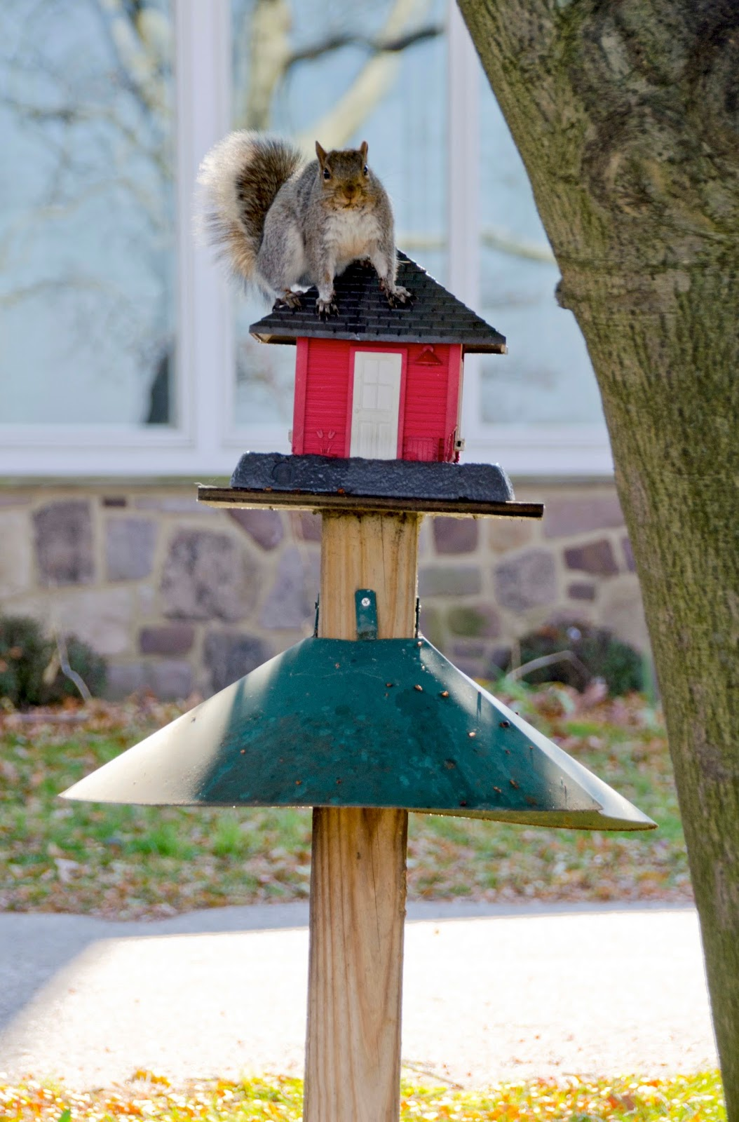 squirrel proof modification bird off keep youtube watch squirrels feeder