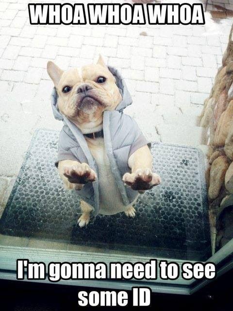 hilarious funny bull dog memes
