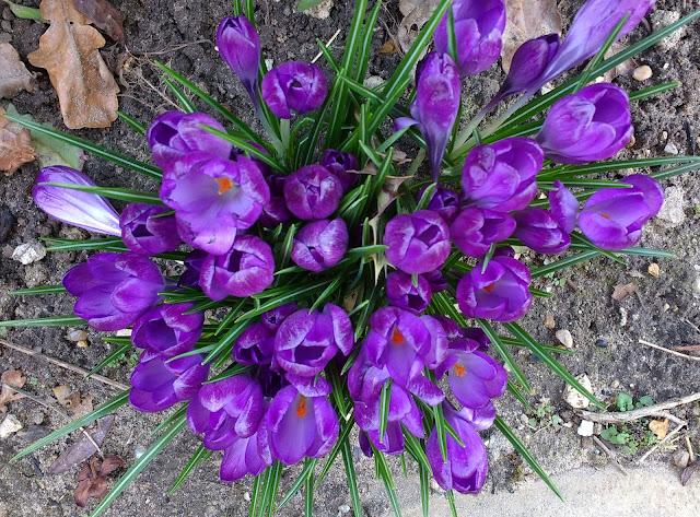 springtime plans