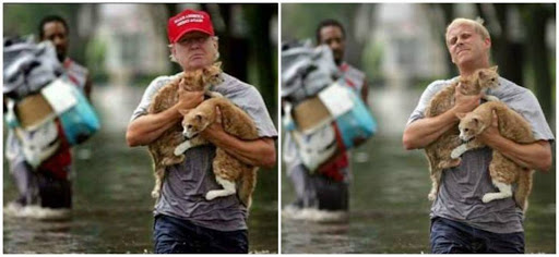 Fake photo tries to show Donald Trump saving kittens after Hurricane Harvey