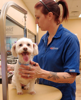 Making appointments for #PetSmartGrooming so easy & flexible #ad