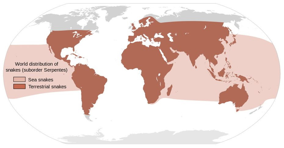 World distribution of snakes
