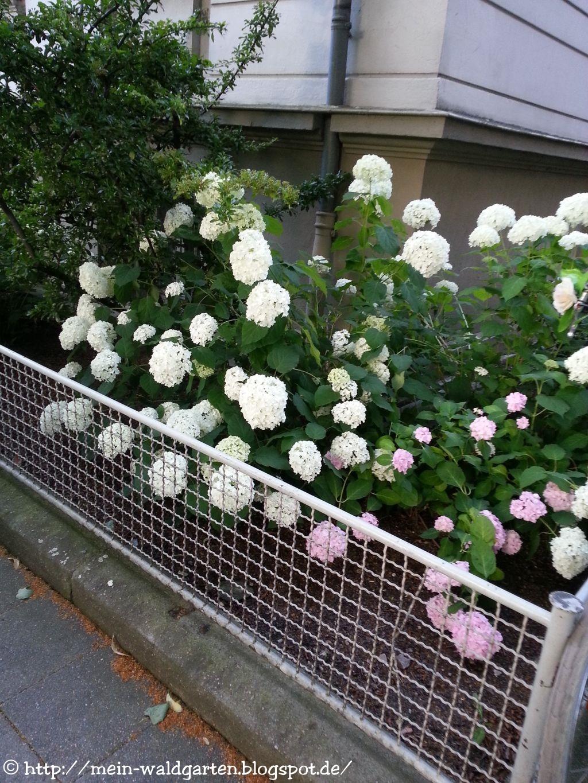 mein waldgarten hortensien durch stecklinge vermehren. Black Bedroom Furniture Sets. Home Design Ideas