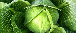 Shchi of white cabbage