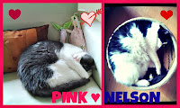 Pink ♥ Nelson
