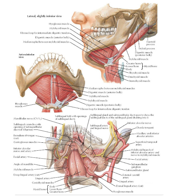 Floor of Oral Cavity Anatomy