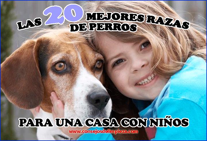 Las 20 razas de perros mas recomendables para los ni os consejos de limpieza trucos tips y - Perros para tener en casa ...