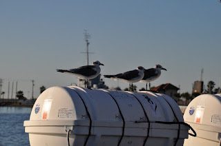 Three seagulls sitting on a life raft canister