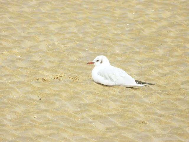 Adorable Seagull