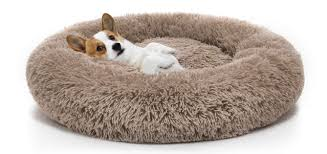 How To Find The Perfect Dog Bed For Your Furry Friend?
