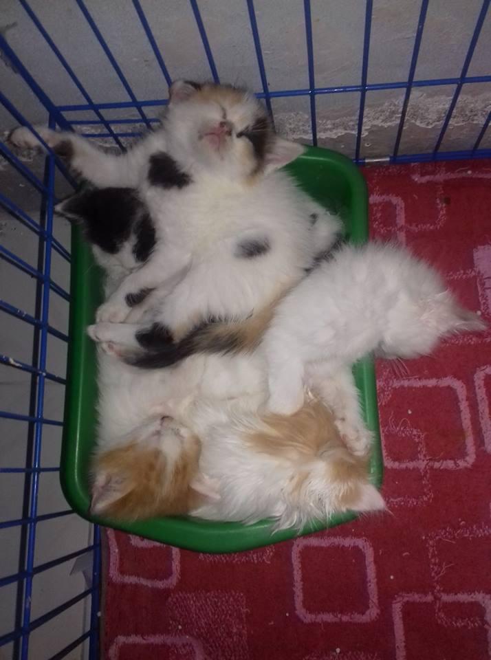 anakan kucing tidur di litter box